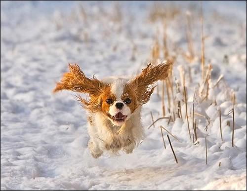 Édition spéciale de la sœur volante. Pour cette dernière et bien que cela soit défendu et illégal, je vais vous aider : malgré le fait que cela soit sur neige, je ne crois pas qu'un ours s'envolerait par la force seule de ses oreilles. Reste notre duo d'animaux domestiques préférés : question pour les experts, quel est le type d'animal domestique qui me possède ?