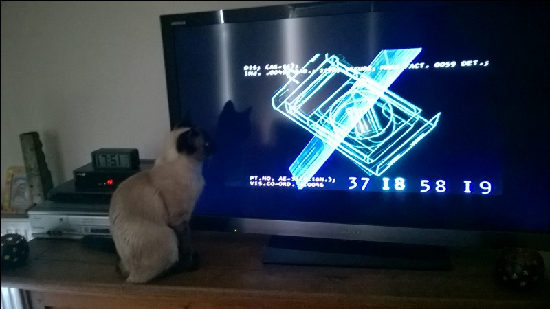Au niveau des rapports aux autres, le chat Siamois est plutôt :