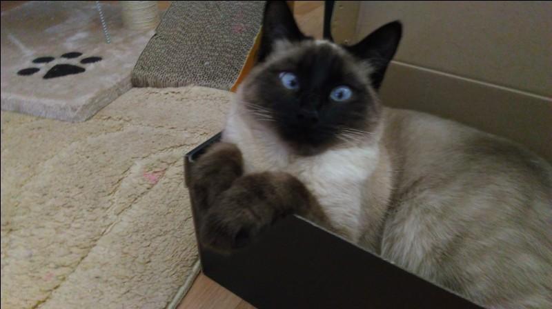 On peut définir la couleur de la robe du chat Siamois par le terme :