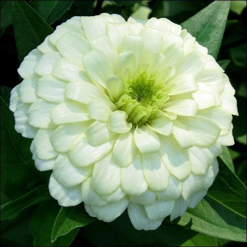 Que sont ces fleurs qui vous feront de jolis parterres ?