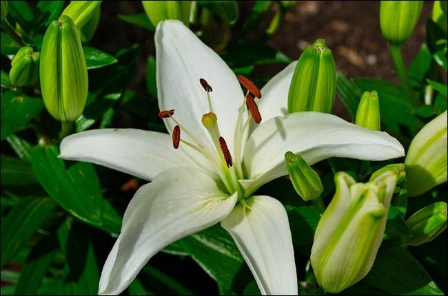 Fleur à choisir pour agrémenter un bouquet de fête !