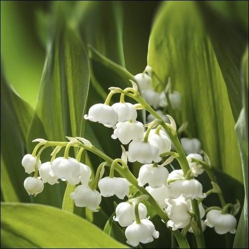 13 fleurs blanches à reconnaître