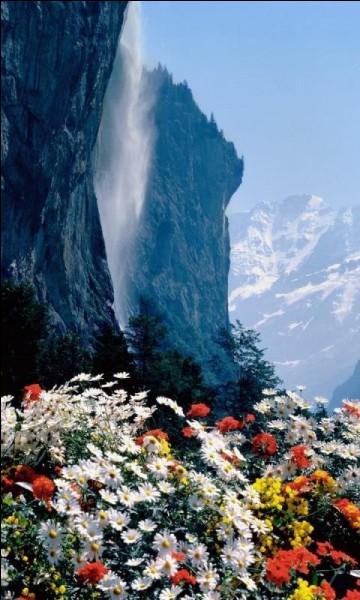 Photographie de fleurs sauvages prise tout près de la ville de Lauterbrunnen, d'où l'on peut voir la Staubbachfälle (nom allemand). C'est une vue remarquable avec les falaises et les sommets verticaux imposants.Où trouve-ton cette chute de 297 m, dont la quasi-totalité est en chute libre ?