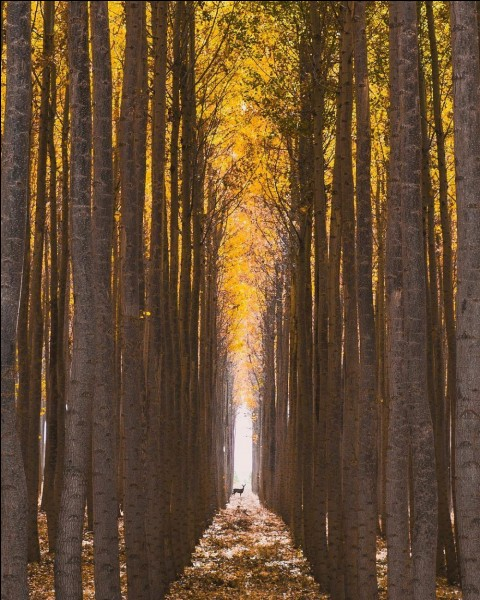 Quelle belle photo de Zachary Edward Martgan ! ''Un photographe autodidacte talentueux et instagrammer basé à Eugene, dans l'Oregon. « Vivre dans cette belle région du monde a fortement influencé mon style de photographe », dit-il '' (pmepmimagazine.info). En effet Zachary photographie la nature et les paysages avec succès beaucoup.De quel grand pays cela nous donne-t-il ces photos.