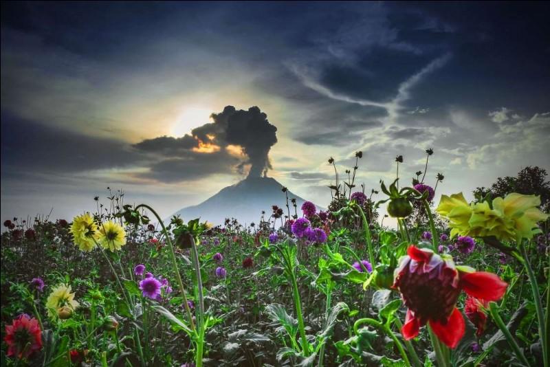 Le mont Sinabung 2 460 m demeure actif. Il se compose de quatre cratères volcaniques. Le sol volcanique est fertile et la température agréablement fraîche est idéale pour cultiver des fruits, des légumes et des fleurs.Trouvez le pays de ce volcan, qu'on voit ici en éruption, ceci depuis le village de Surbakti, dans le Sumatra du Nord.Merci d'avoir voyagé avec moi.