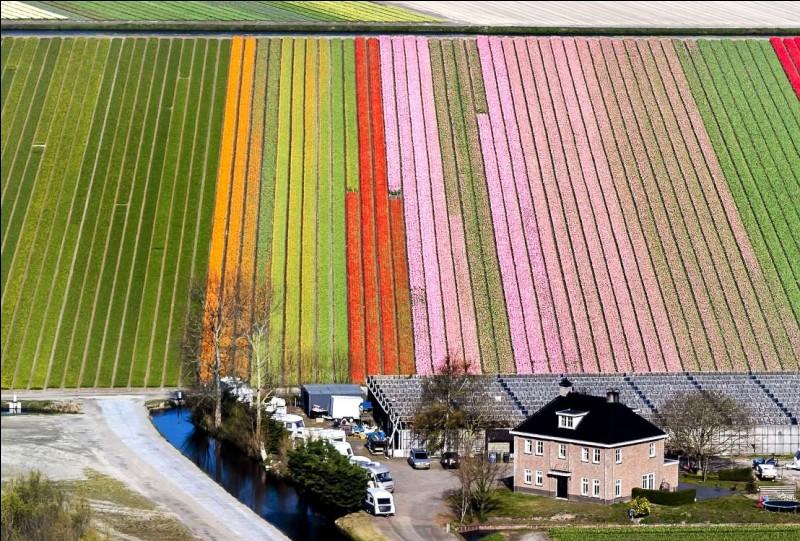 Elle peut aussi être sculptée notre planète. Dans ce pays, c'est partout une célébration du triomphe sur l'eau. Pays sur mesure pour un forfait vélo & péniche. La photo nous montre un champ de fleurs dans le Keukenhof, soit un parc floral surnommé le Jardin de l'Europe, qu'on peut voir à Lisse, en Hollande du sud.Quel autre nom donne-ton aussi à ce pays ?