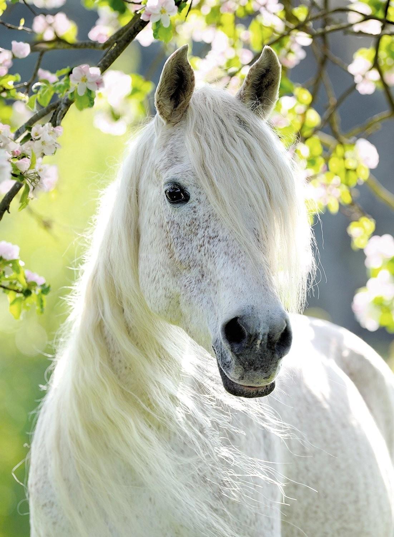 Seras-tu incollable sur les chevaux ?