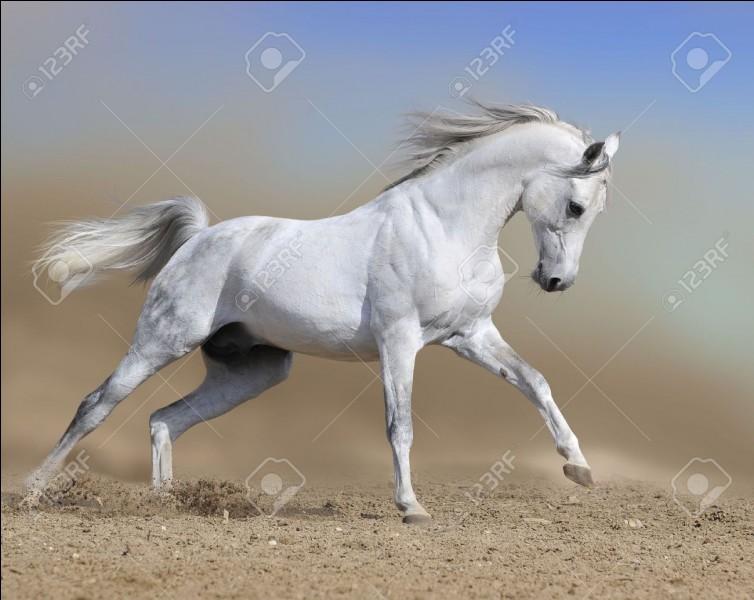 Et son cheval s' appelle ….