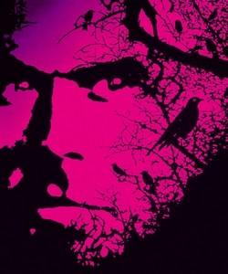 L'univers de Stephen King (04)