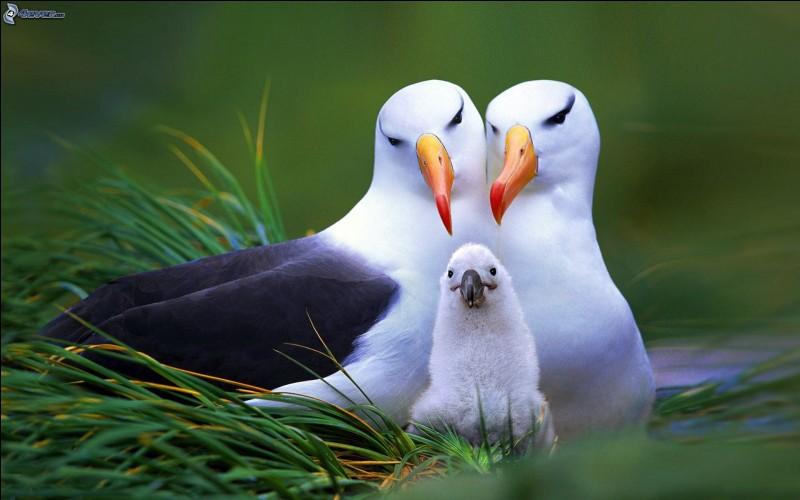 """Qu'est-ce qui manque aux lettres """"alba..."""" pour avoir un oiseau ?"""