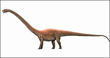 Quelle était la hauteur du diplodocus ?