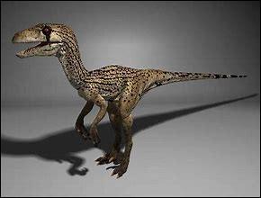 Quelle était la particularité du bout du museau de l'utahraptor ?