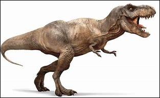 Combien mesurait environ un t-rex adulte ?