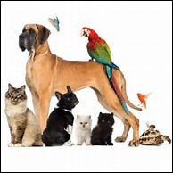 Quel est ton animal préféré ?