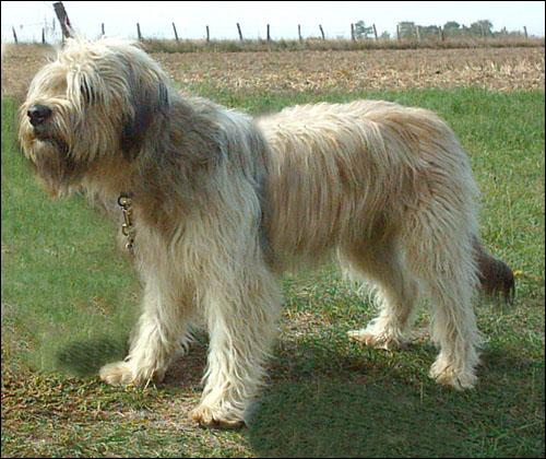 Quizz les races de chiens quiz races chiens races de chiens - Foto poile ...
