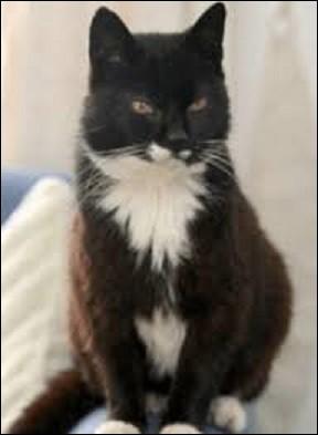 Le 6 août 2010 meurt ''Creme Puff'' la plus vieille chatte du monde. Quel âge avait-elle ?