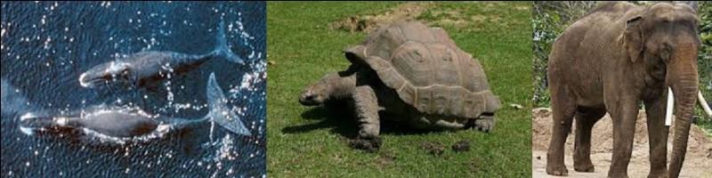 Quel animal est celui qui détient le record de longévité sur Terre en pouvant vivre plus de 200 ans ?