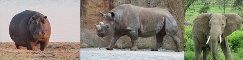 Commençons tranquillement. Quel mammifère terrestre est le plus lourd du monde ?