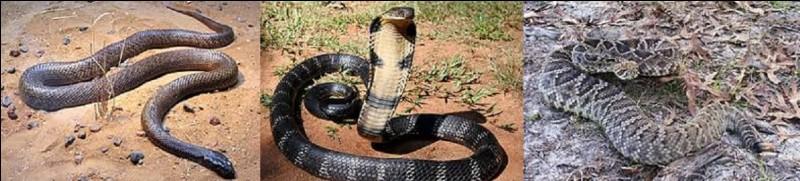 Quel serpent est le plus venimeux du monde ?