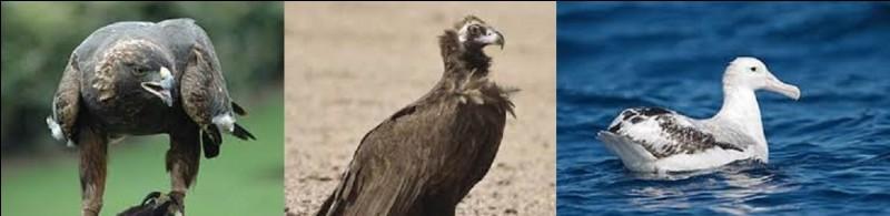 Parmi ces trois espèces d'oiseaux, laquelle détient le record de la plus grande envergure, certains spécimens atteignant jusqu'à 3,70 m ?