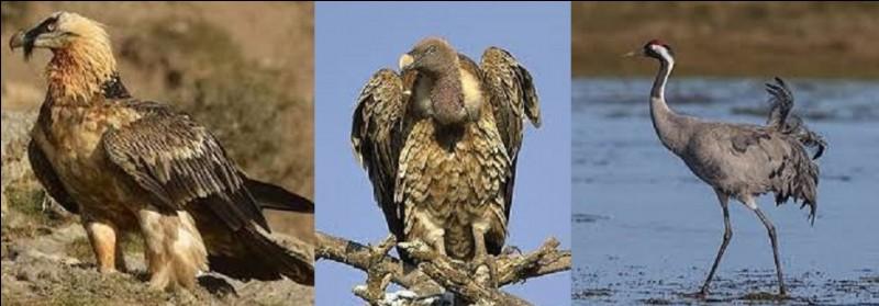 Restons un instant avec nos amis à plumes. De ces trois oiseaux, lequel détient le record d'altitude en vol ?