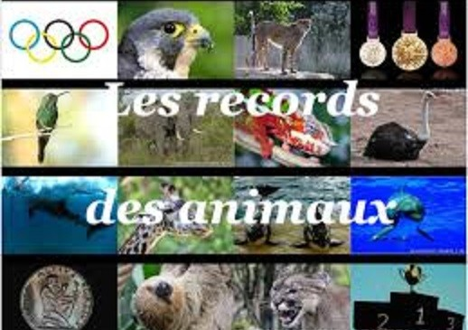 Les records animaliers