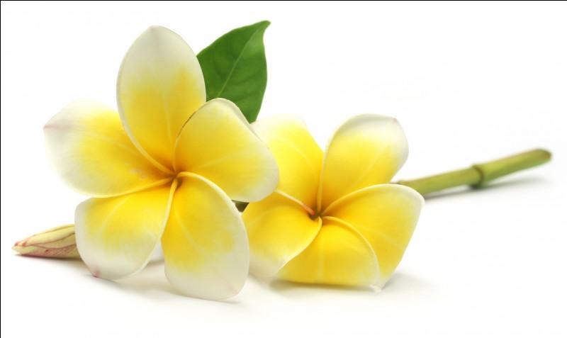 Et combien d'espèces de plantes à fleurs ont été répertoriées ?