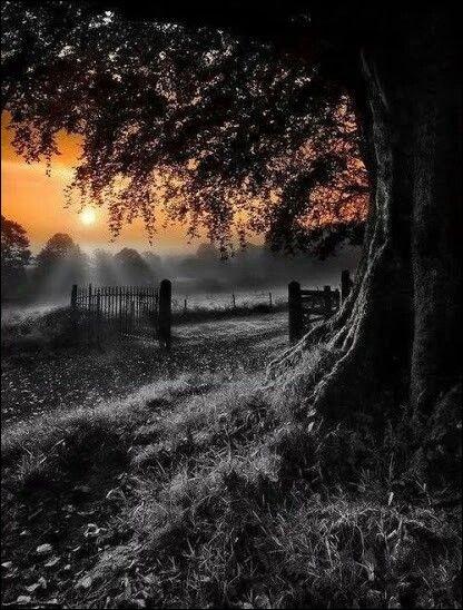 """Dans quelle chanson de Cabrel entend-on """"Il voulait trouver mieux que son lopin de terre, que son vieil arbre tordu au milieu, trouver mieux que la lumière du soir"""" ?"""
