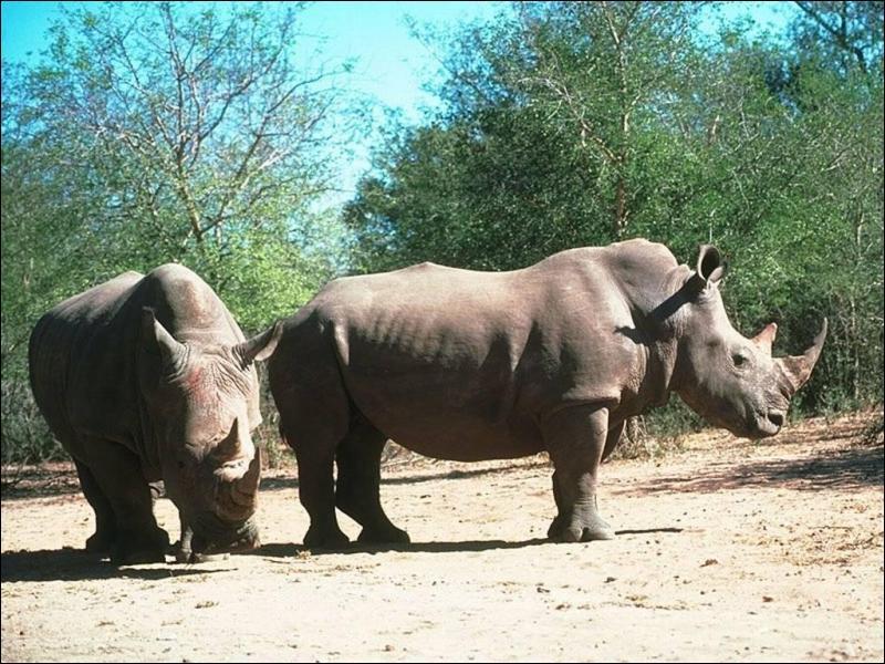 De quoi se nourrit le rhinocéros ?