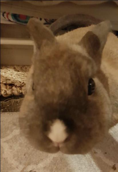 Le lapin respire uniquement :