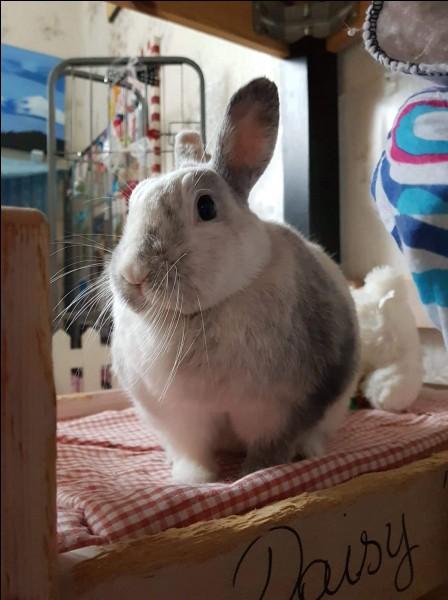 Les oreilles du lapin ont une particularité, laquelle ?