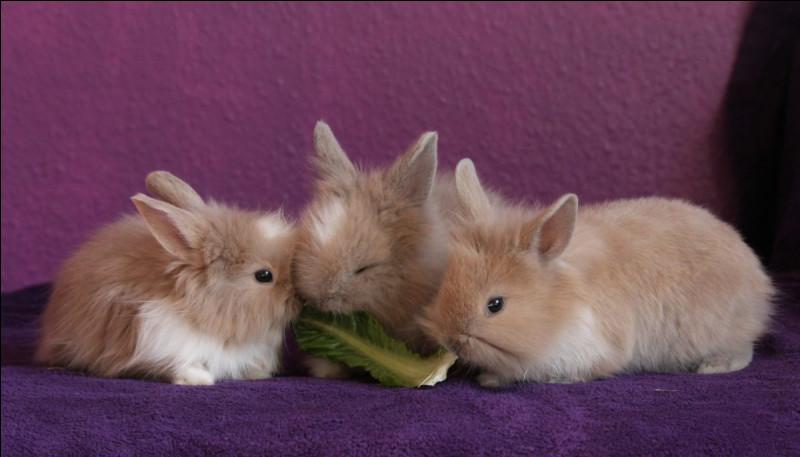Le lapin peut-il distinguer toutes les couleurs ?