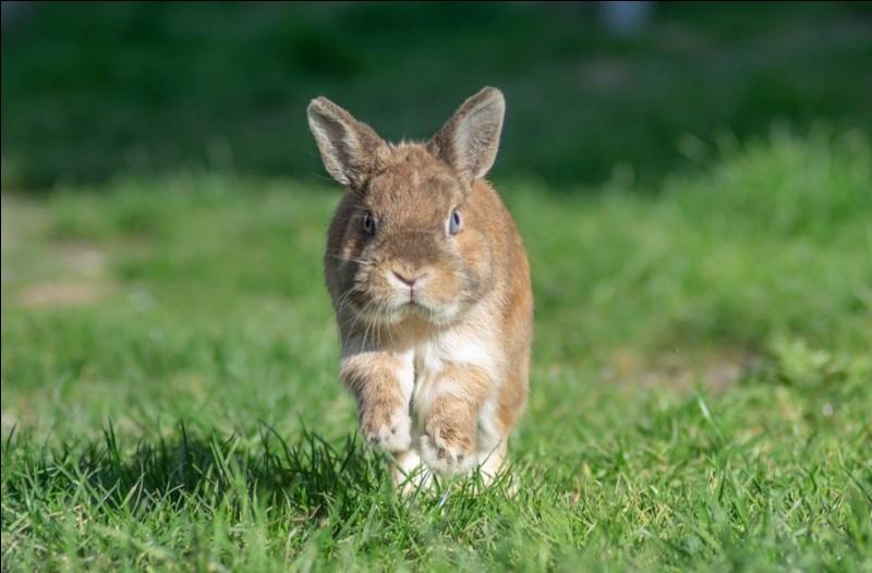 Le lapin tape très fort les pattes arrière au sol, pourquoi ?