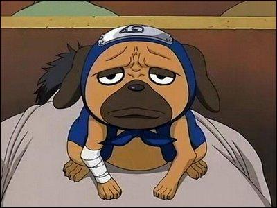 Je suis un chien ninja invoqué par Kakashi.