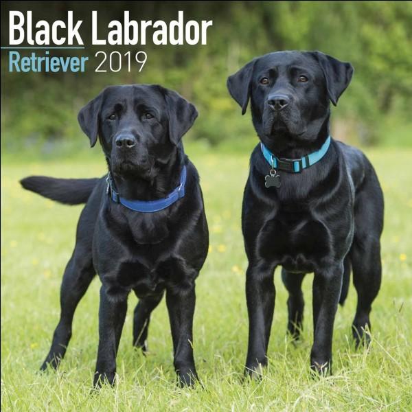 Le Labrador est une région...