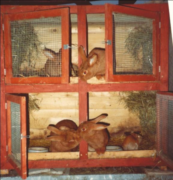 Comment appelle-t-on l'élevage de lapins domestiques ?