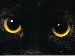 Quel est le chat protecteur de la British Library ?