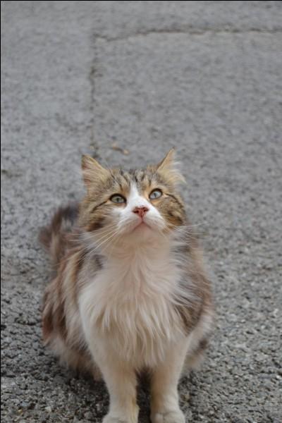 Quel est le physique de Pattenrond, le chat d'Hermione ?