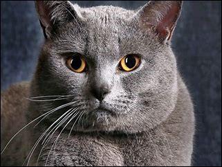 Quand la vision du chat est-elle la meilleure ?