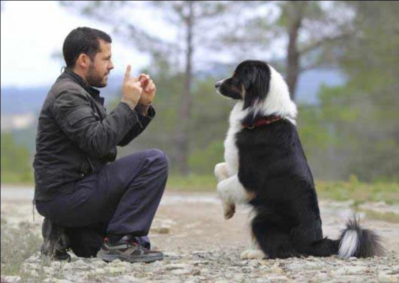 Quand un chien n'écoute pas nos ordres il faut...