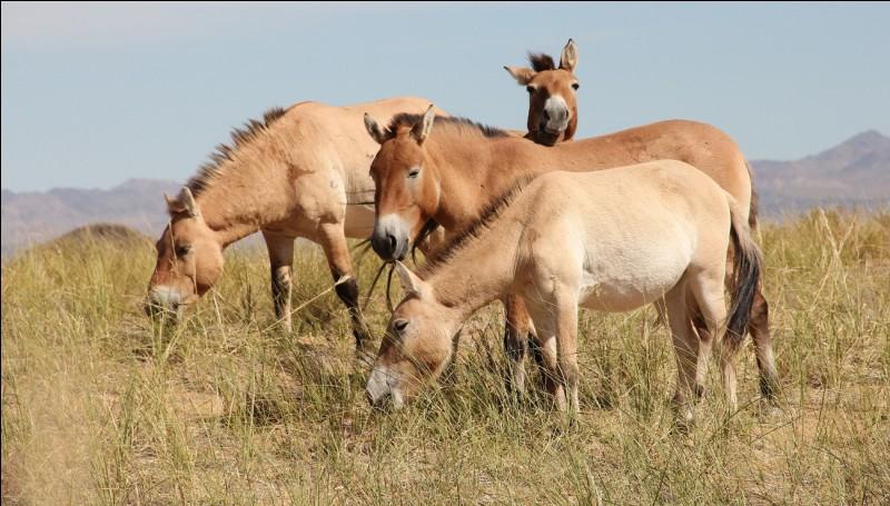 Quelle peut être la couleur de la peau d'un cheval ?