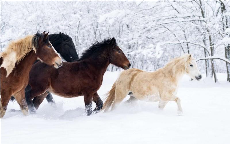 Les chevaux sont...