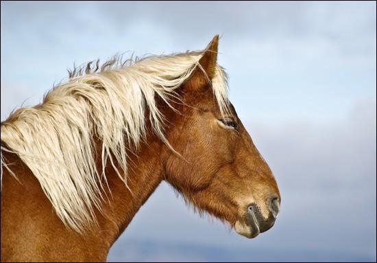 Quelle plante est toxique pour un cheval ?
