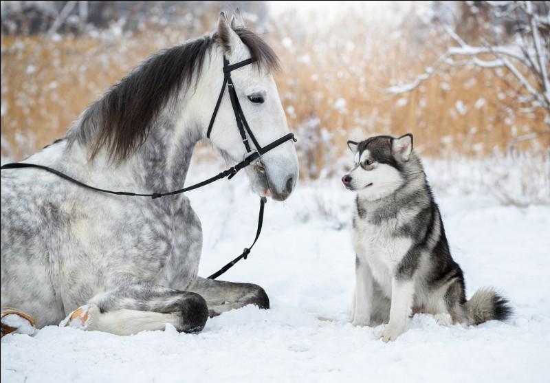 Combien de chromosomes le cheval a-t-il ?