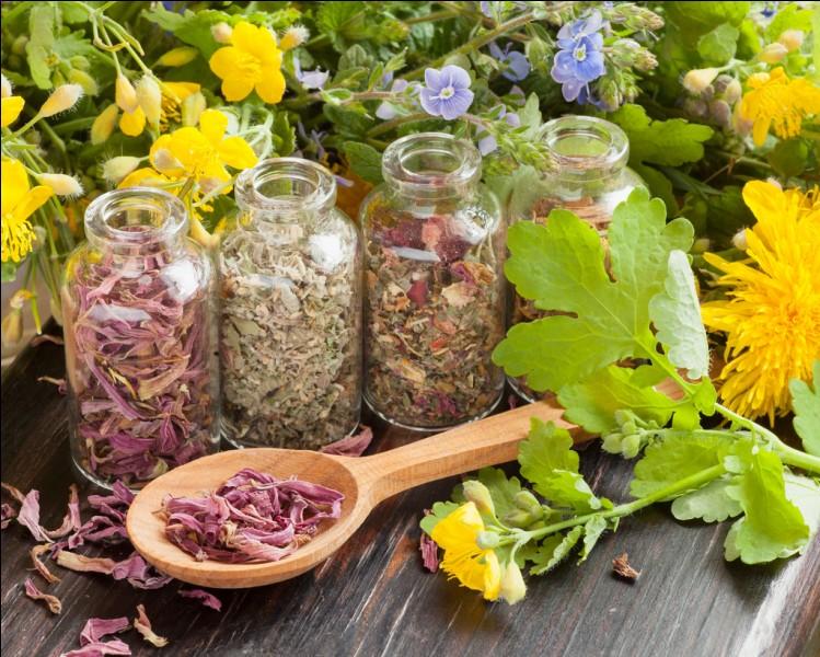 Les plantes médicinales servent à préparer des plats culinaires.