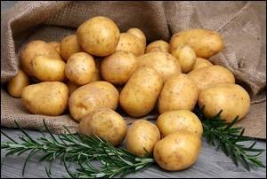 Laquelle de ces propositions désigne une variété de pommes de terre ?