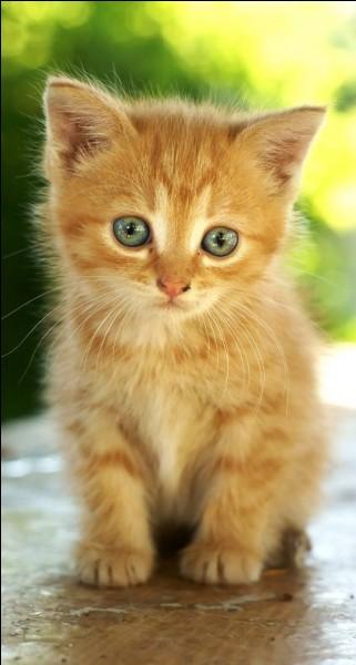 Que boit un chaton ?