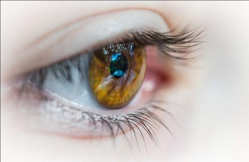 Quelle couleur d'yeux les chats ont-ils le plus souvent ?