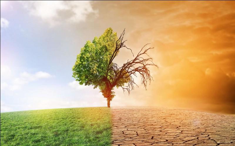 Nature, écologie/actualité : Que vivons-nous en ce moment ?