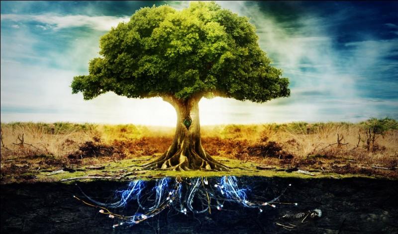 Choisis un arbre.